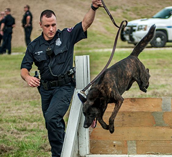 k9 unit training